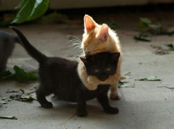cats hugging .jpg